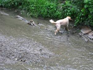 Dogs Climb Embankment To Return Large Stick